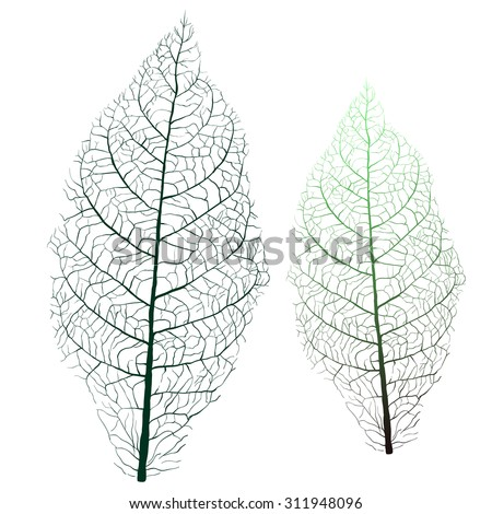 tobacco leaf with veins - stock vector