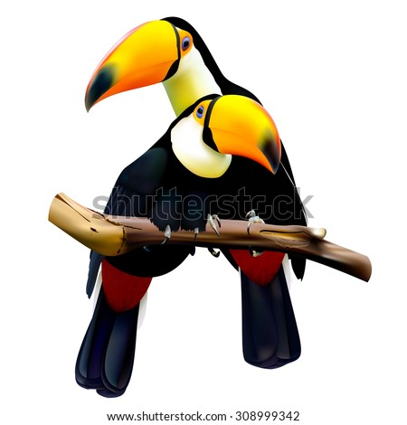Toco toucans sitting on the branch. Vector illustration. - stock vector