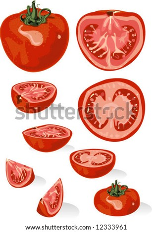 tomato or apple of love in section - stock vector