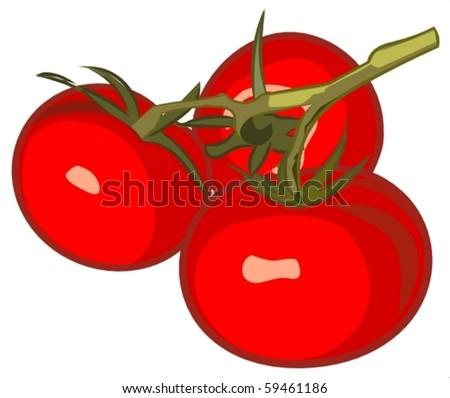 tomatoes - stock vector