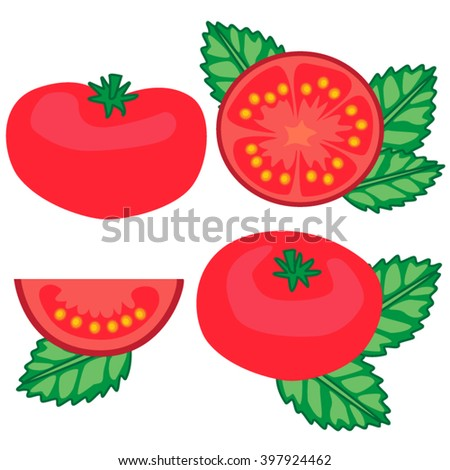 tomatoes and basil set vector illustration - stock vector