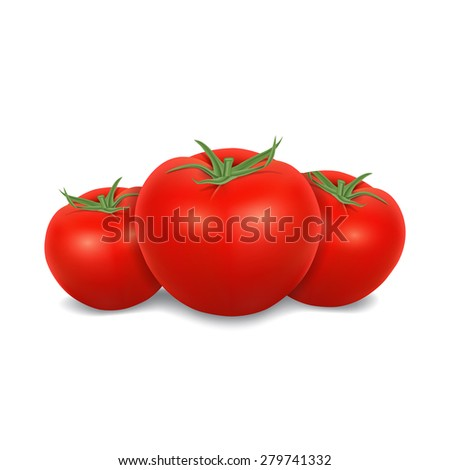 Tomatoes isolated on white. High quality vector. EPS10 vector. - stock vector