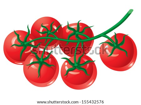 Tomatoes on the Vine - stock vector