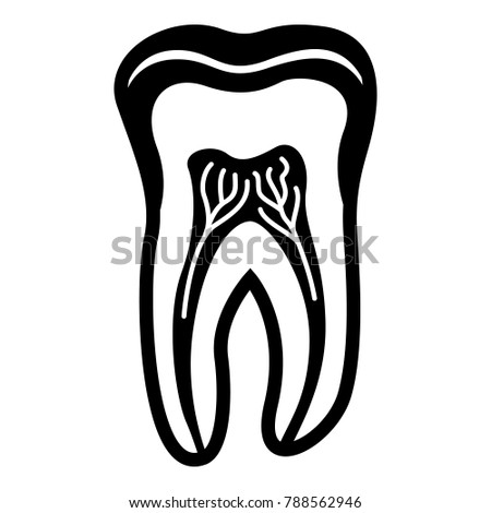 structures of teeth  anatomy of the tooth structure stock