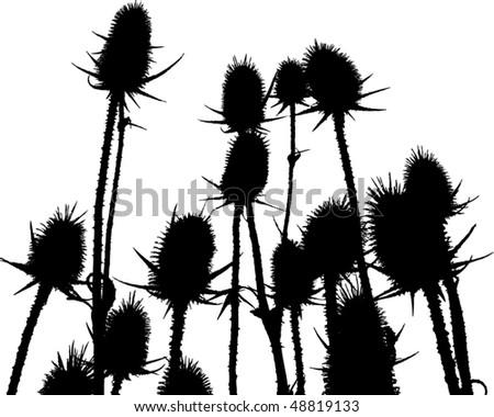 Torn flower plant - stock vector