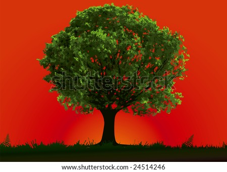 Tree and red sunset in summer day