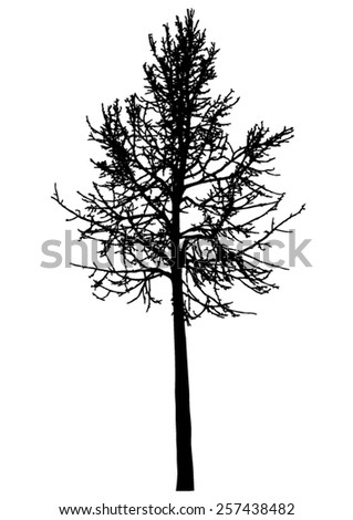 Tree - bare branches - black silhouette - vector