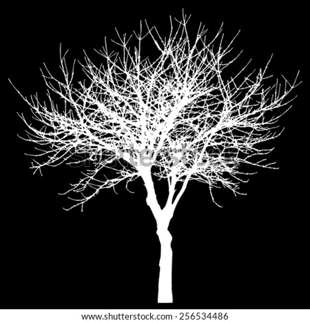 Tree - bare branches - crop silhouette - with black background - isolated vector