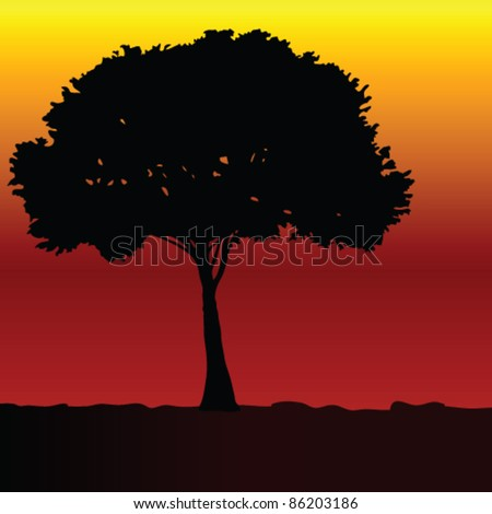 tree black vector silhouette on color sunset background