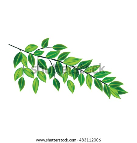 tree branch green leaves isolated on white background art abstract design element vector