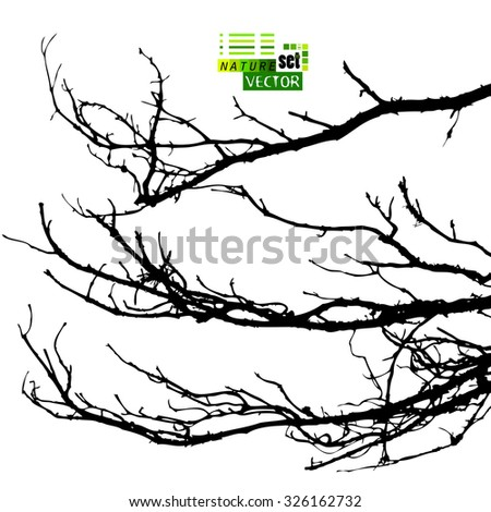 Tree branches. Vector - stock vector