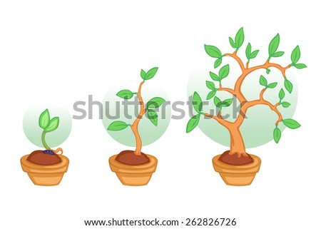 Tree growing from little seed step by step - stock vector