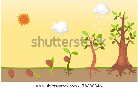 Tree  life cycle vector - stock vector