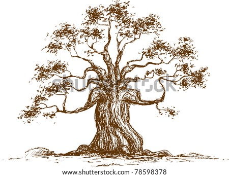 Tree on a white background, vector illustration