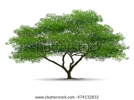 tree on white background,Vector trees in silhouettes.Create many more trees with leaves and bare trees on the bottom,Set of abstract trees,Green Oak,tree with a realistic