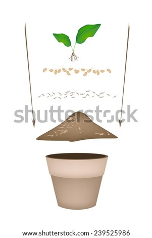 Tree Planting Steps, Illustration of Ceramic Flower Pots with Potting Soil, Fertilizer, Seeds and Young Tree for Growing Plants, Herbs and Vegetables.  - stock vector