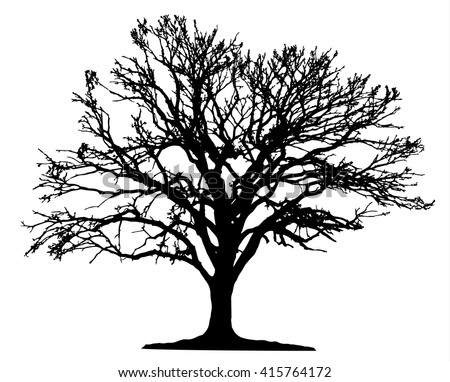 Tree silhouette on white background - stock vector