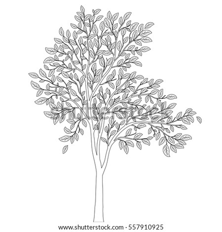 Tree Leaves Coloring Book Page Vector Stock Vector 557910925 ...
