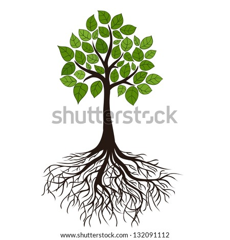 tree with roots and dense foliage, vector image - stock vector