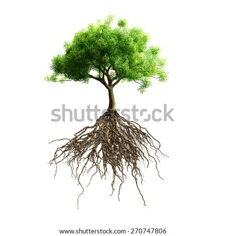 tree with roots vector - stock vector