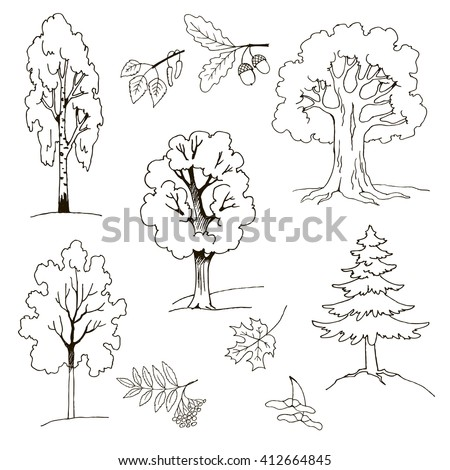 trees birch maple mountain ash oak stock vector 412664845 shutterstock