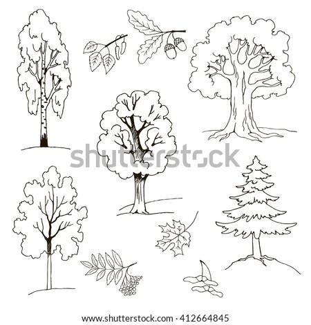 trees birch maple mountain ash oak stock vector 412664845 shutterstock