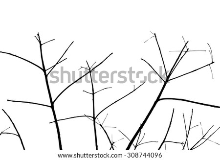 trees silhouette on vector style