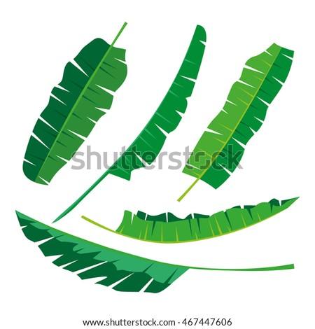 Banana Leaf Stock Vectors, Images & Vector Art | Shutterstock