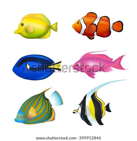 Tropical Fishes Set. Zebrasoma, Clownfish, Blue Tang, Lyretail Anthias, Angelfish, Moorish Idol Vector Illustration Set. - stock vector