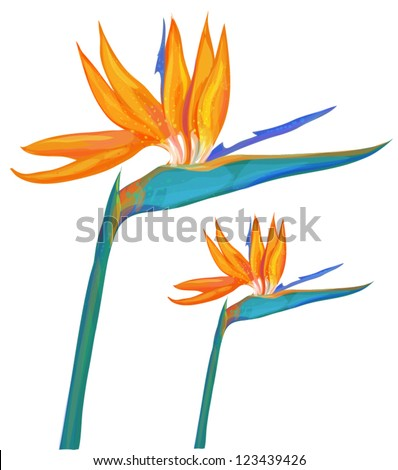 tropical flower - stock vector