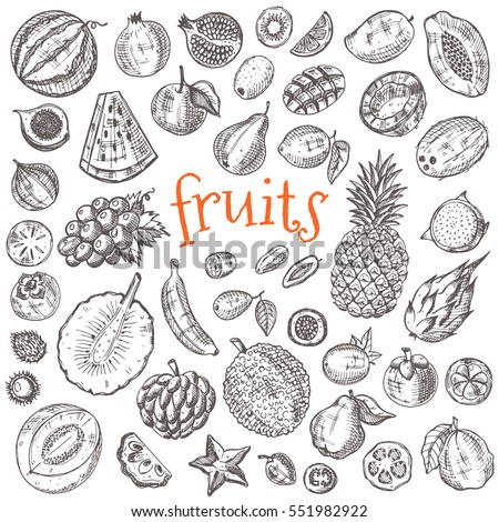 Tropical fruits set. Hand drawn vector illustration. Design elements. Carambola, lychee, kiwi, papaya, watermelon, rambutan, honeydew, coconut, kumquat, grapefruit, loganberry, pomegranate and other.