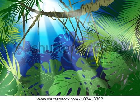 tropical landscape (tropical plants a vector drawing) - stock vector