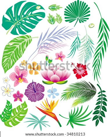 Tropical leaf and flowers