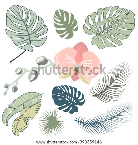 Tropical leaves and the orchid, Vector illustration - stock vector