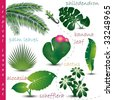 Tropical Leaves Collection - stock vector