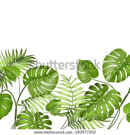 Tropical leaves design for text card. Vector illustration. - stock vector