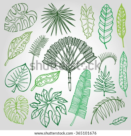 Tropical palm leaves set.Vector leaf,outline drawing in vintage style.Isolated on white.Monstera leaves.Tree branches.Exotic graphic  illustration,tropic paradise collection.Plant vector leaves,summer - stock vector