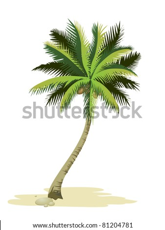 Tropical palm tree. Detailed vector.