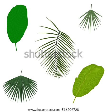 tropical palm tree jungle leaves set stock vector 2018 516209728 rh shutterstock com palm tree leaves vector summer palm tree leaves vector