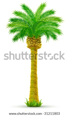 tropical palm tree with green leaves isolated - vector illustration - stock vector
