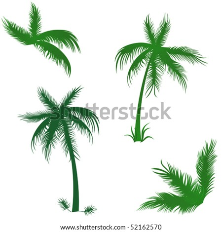 Tropical palms set. Vector objects isolated, elements for Your summer design - stock vector
