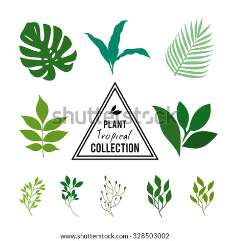 a description of various plants The plant stem is a part of the shoot system in the angiosperms it has several classifications, consists of different parts, and performs various functions.