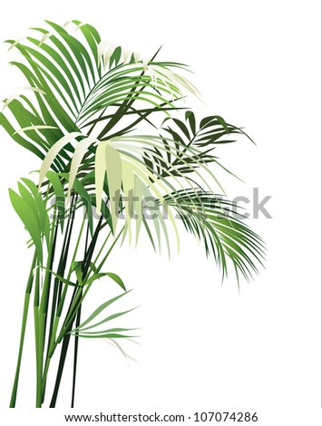 Jungle Plant Drawing Tropical plants vector drawing