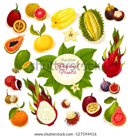 Tropical vector whole and sliced durian and carambola, dragon fruit and guava, lychee and feijoa, passion fruit maracuya, figs and rambutan, mangosteen, orange, papaya, blood orange and longan fruits
