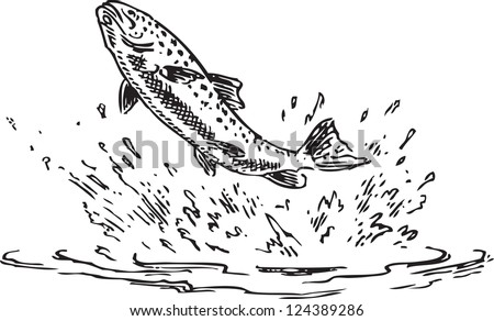 Trout Jumping Out Of Water Figure Done By Hand Vector Illustration