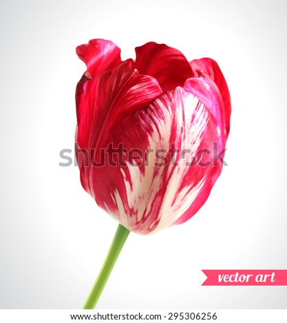 Tulip close up. Vector art. Love concept for wedding invitations, cards, tickets, congratulations, branding, boutique logo, label. Red pink beige green soft colors. Web, website and mobile interface - stock vector