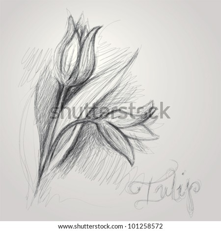 Tulips Sketch Stock Images, Royalty-Free Images & Vectors ...