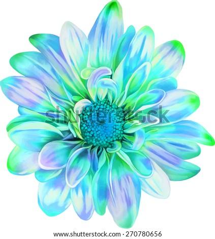 Turquoise blue chrysanthemum flower, Spring flower.Isolated on white background. Vector golden-daisy - stock vector