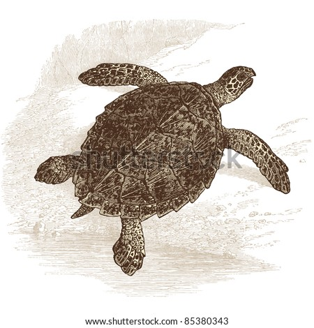 """turtle - vintage engraved illustration - """"Histoire naturelle"""" by Buffon and Lacépède published in 1881 France - stock vector"""