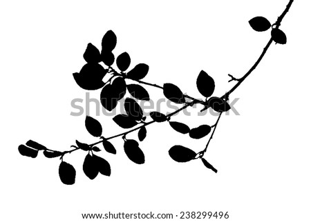 Twig with many rounded leaves isolated on white - stock vector